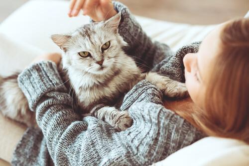En katt som gosar med sin ägare.