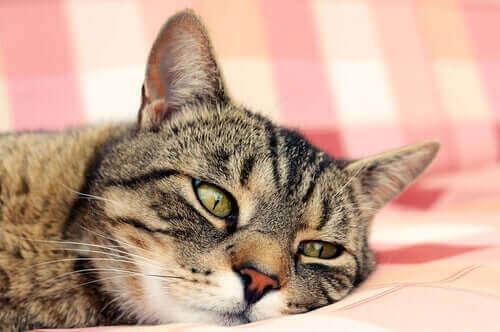 Katt vilar på en kudde.