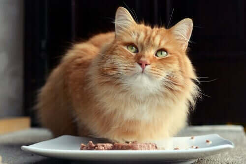 En katt som äter dietmat.