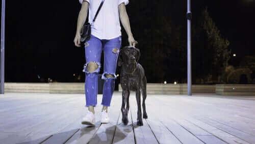Person som är ute och går med hund på natten.
