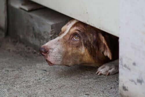 En rädd hund som gömmer sig i ett hål.