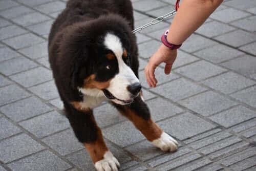 Rädd hund skyggar bort från människa.