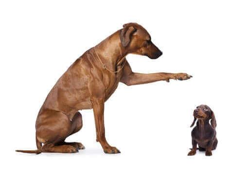 Stor hund bredvid en liten hund.