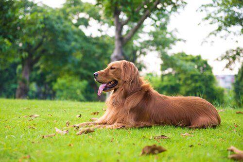 Hur man bör ta hand om en stor hundras