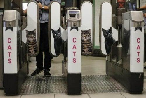 Londons tunnelbana bytte ut reklam mot katter
