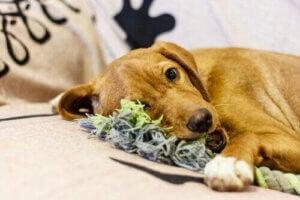 hund med leksak