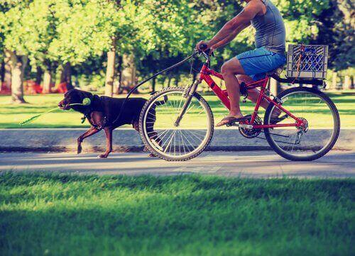 Agare cyklar till parken med sin hund.