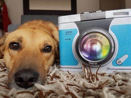 Boken skriven av en hund: Lindas historia