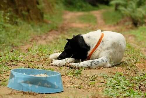 Djur som kan drabbas av anorexia: När ett husdjur vägrar äta
