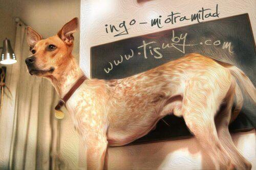Min andra hälft (Mi Otra Mitad) - En sång för alla hundälskare