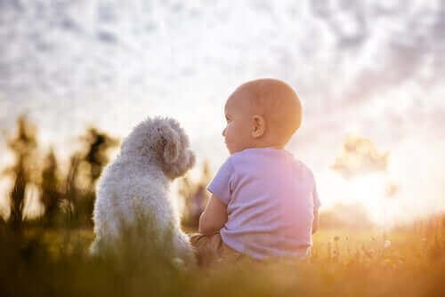 Hund sitter med barn i solnedgången.