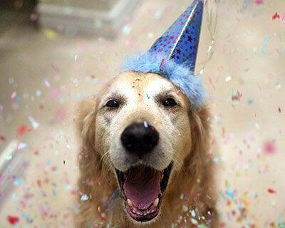 Hund firar födelsedag i partyhatt.