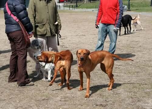 Hundar ute på hundgården.