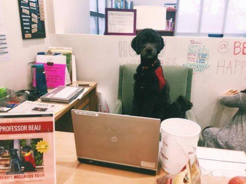 Hundprofessorn vid ett skrivbord.