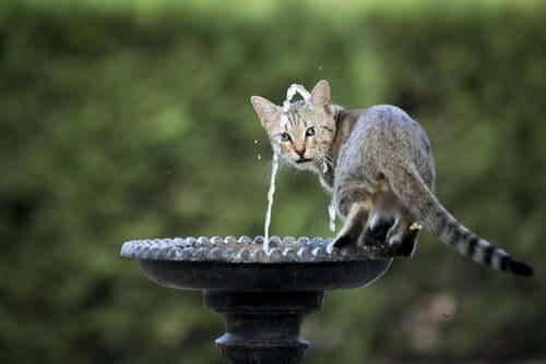Katt står i en fontän.