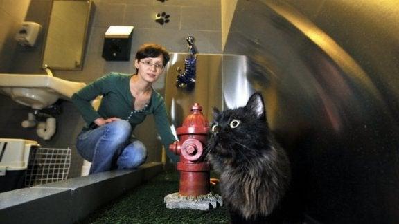 En katt på toaletten för husdjur på en flygplats.