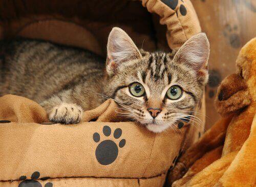 Så kan du lära katten att sova i sin egen säng