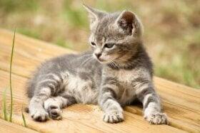 14 kreativa namn för din katt: Vilket passar bäst?