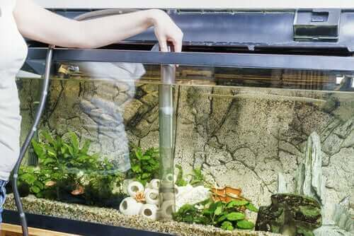 Att rengöra akvariet är viktigt.