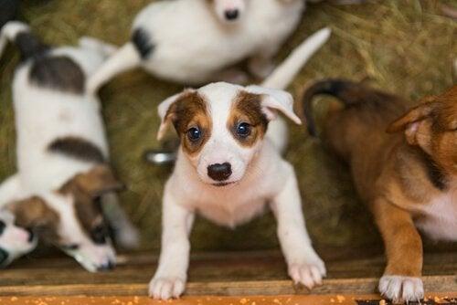 Vad är skillnaden mellan djurhem och fosterfamilj?