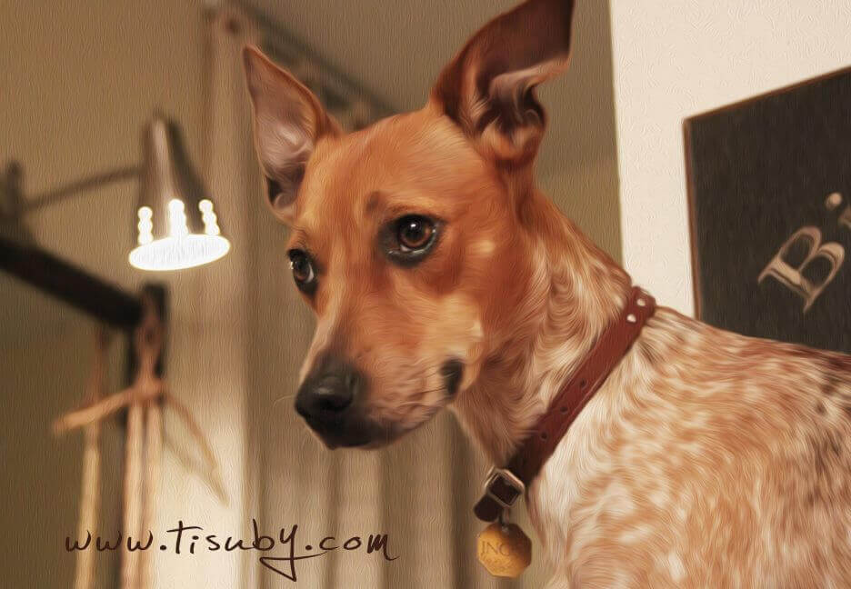 Mi Otra Mitad: Tisubys hund.