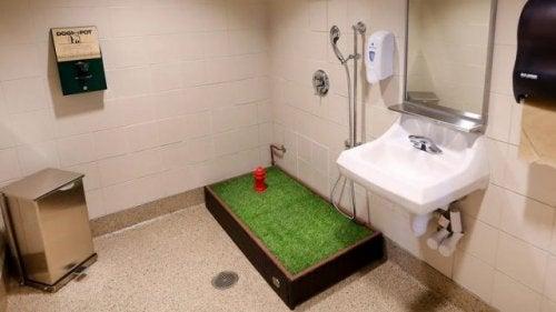 En toalett för husdjur på en flygplats.