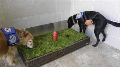Stor ökning i antalet toaletter för husdjur på flygplatser