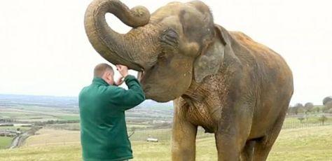 5 virala infektioner som kan påverka elefanter i fångenskap