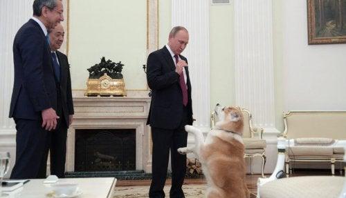 Vladimir Putins hund skrämmer japanska journalister