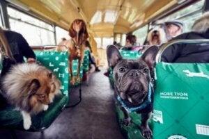 Turistbuss för hundar
