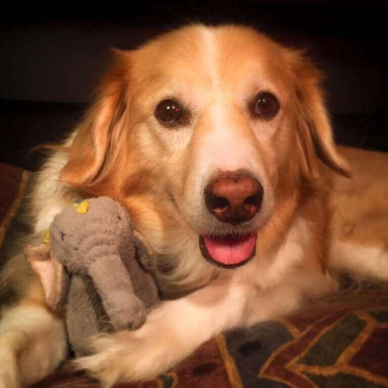 Maple håller i sin elefantleksak