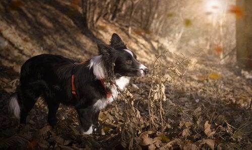 De 10 mest atletiska hundraserna i världen