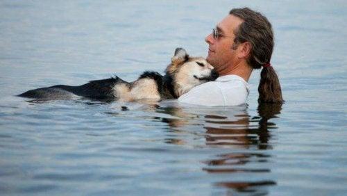6 berömda husdjur på Facebook