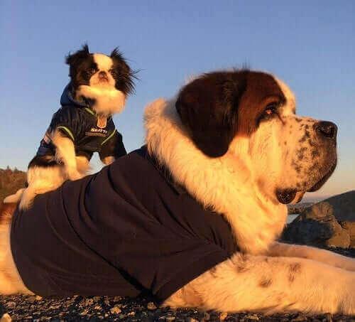 De två hundvännerna är ute och går i vintersolen.