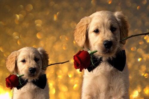 Behöver du en present? Perfekta böcker för hundälskare!