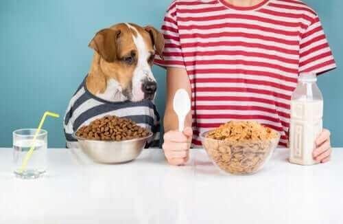 Hund sitter vid bordet med sin matskål.