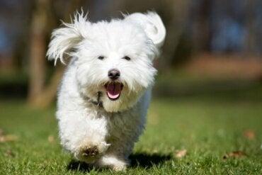 Varför din hund tar sin godbit till en avskild plats