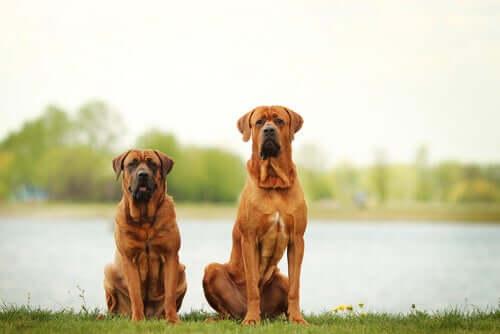 Två hundar poserar.
