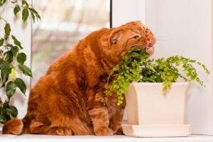 Katt äter på växt