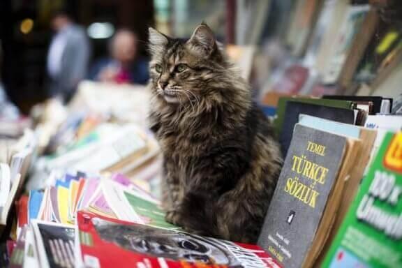 Katt sitter på böcker vid en bokhandel