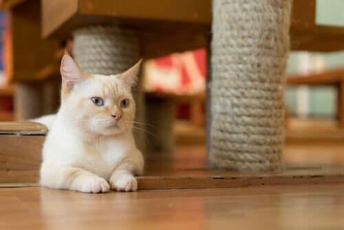 En katt sitter under sin klösbräda.