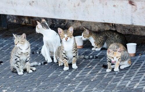 Ett gäng katter väntar på mat.