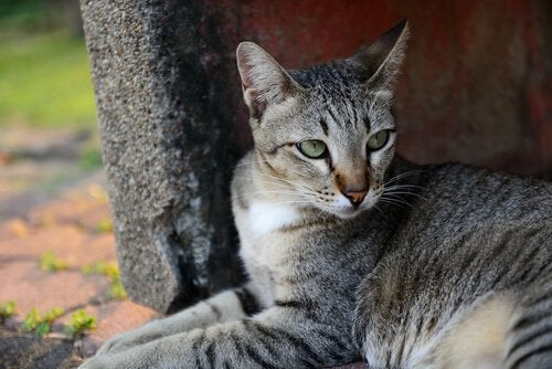 Katter är mycket självständiga djur: Både tama som vilda