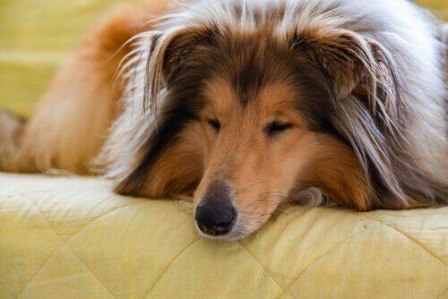 Leva med en hund: Hur du förbättrar er relation