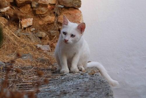 Vad representerar katter i olika kulturer?