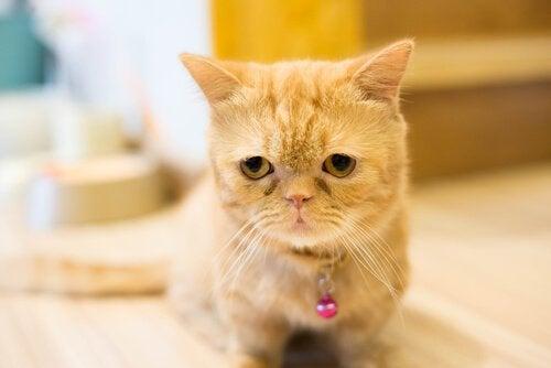 Orange katt sitter ner och ser ledsen ut.