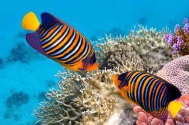 Allt om färg: 5 intressanta fakta om tropiska fiskar