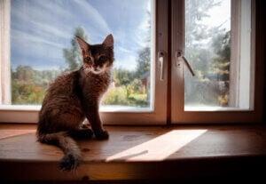 passa husdjur: katt i fönster