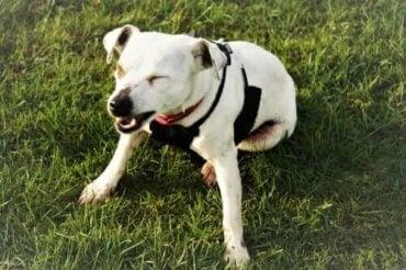 Varför nyser hundar? Tecken på sjukdom eller allergi