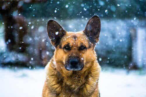Bästa tipsen på vinteraktiviteter för din hund